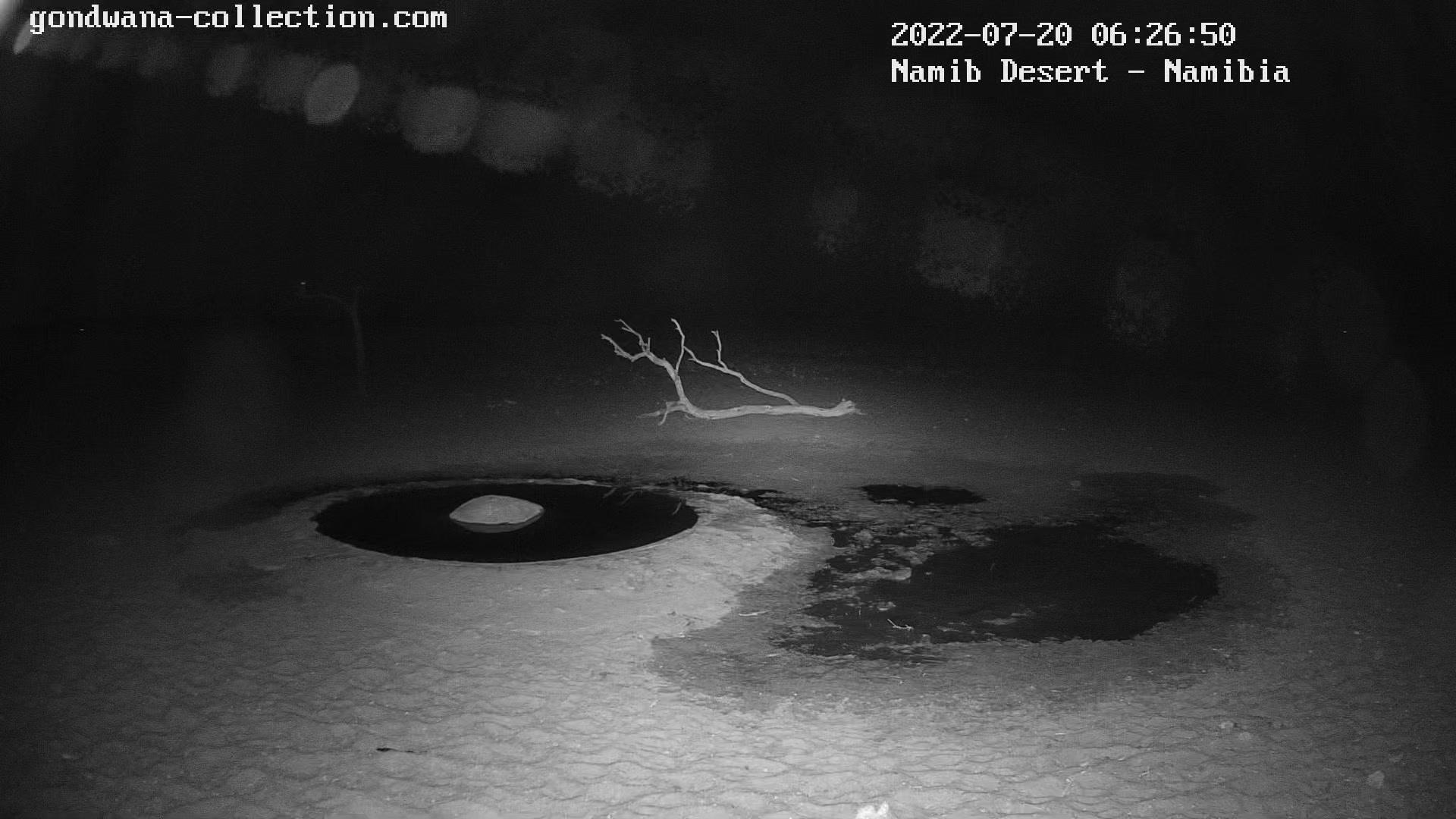 Namib Desert Waterhole Cam